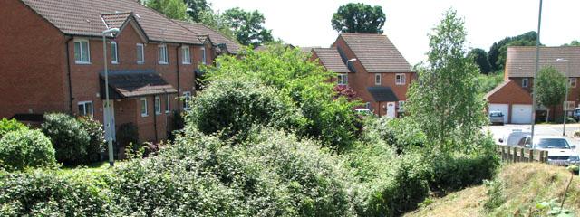 Tree Mortgage Report