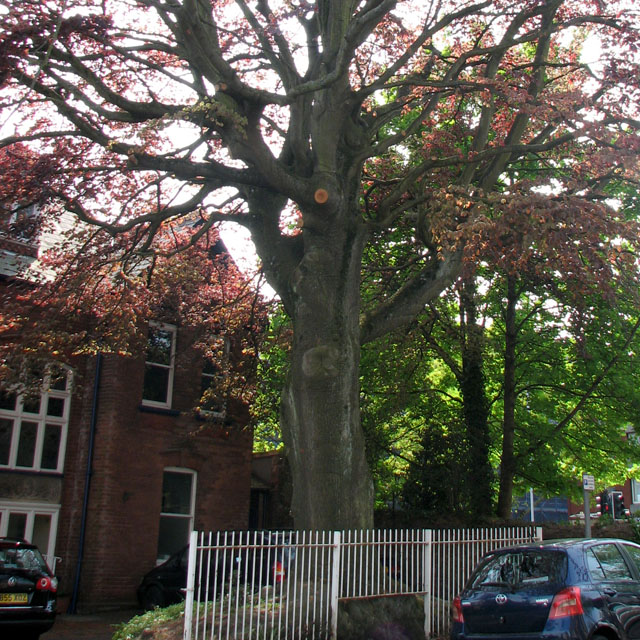 Tree Management for Schools